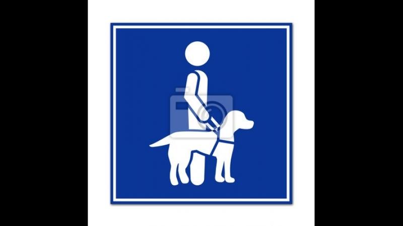 собаки поводыри