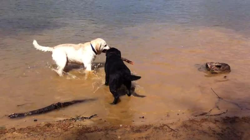 Две собаки и одна палка