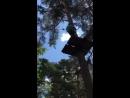 лесной экстрим 24 06 18г