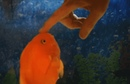 Fish Likes to Be Pet Create Discover and Share Awesome GIFs on Gfycat