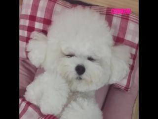 Собаки спят в кроватках