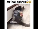 В этом видео работал каскадер, не один котик не пострадал