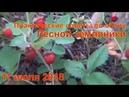 Практические советы по сбору и выращиванию земляники 11 июля 2018 Поход в лес тайгу Сибирь