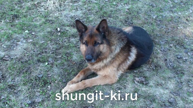 Шунгит_ собака.ру