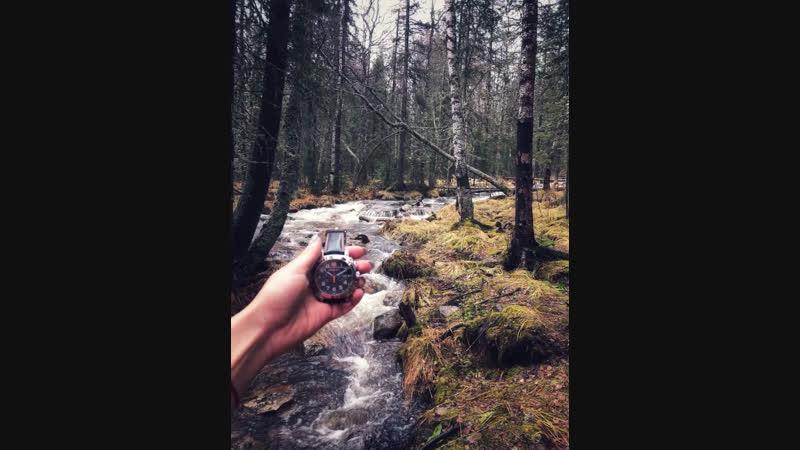Молния в лесу