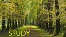 6 Hour Focus Music: Study Music, Alpha Waves Music, Homework Music, Soft Music, Relaxation ☯1867