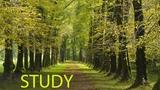 6 Hour Focus Music Study Music, Alpha Waves Music, Homework Music, Soft Music, Relaxation