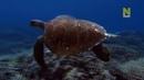 Жизнь на Большом Барьерном рифе Большой Барьерный риф Часть 1 Док фильм