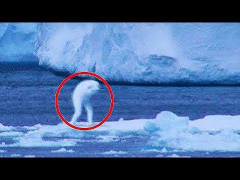 TOP 5 Tajemná stvoření zachycená na kameru