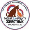 Закон нужен сейчас   Пикет   Петрозаводск