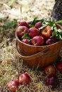 О пользе яблок с корицей