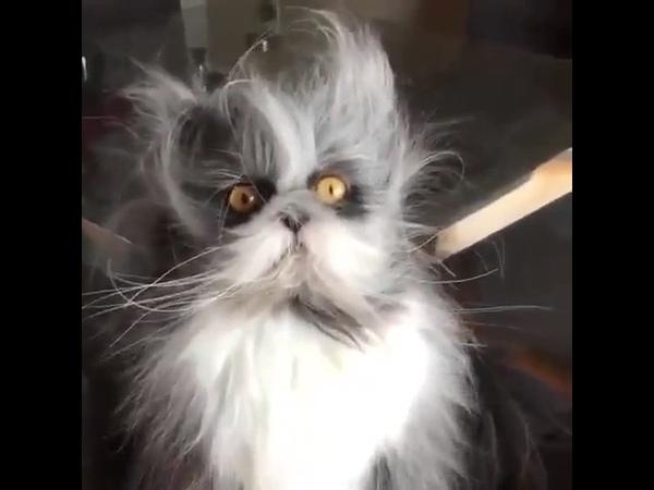 Так вот ты какой, Ёшкин кот!