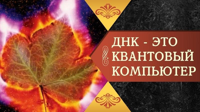 ДНК ЭТО КВАНТОВЫЙ КОМПЬЮТЕР Реж Галина Царёва