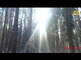 03. Прогулка по берёзовскому лесу.