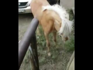 курить лошадям вредно