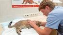 Ночью спасаем кошку с травмой головы Нам было страшно такое увидеть help the cat need now.avi