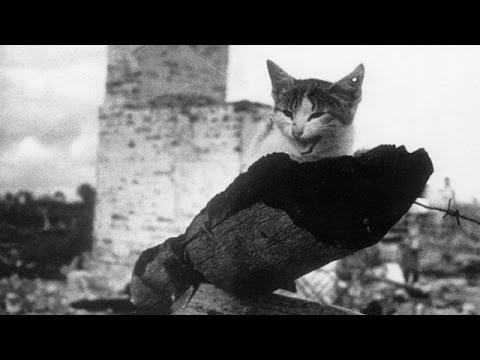 КОШКИ БЛОКАДНОГО ЛЕНИНГРАДА. В 1941 году в блокадном Ленинграде начался страшный голод. Есть было нечего. Зимой с улиц города начали исчезать собаки и кошки их употребляли в пищу. Когда есть