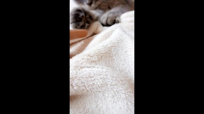 😚 нежнятина ; мои любимые плюшевые лапки , нежное , непостижимо розумное котеня, которое человеческую кожу берет подушечками