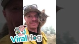 Cat Rescued From Paradise Fires Perches on Fireman ViralHog