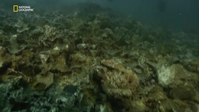 Годы опасной жизни 05 Коллапс океанов 2016 P1 Велес Б Хасанов 1 24 ts