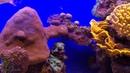 Аквариум редких рыб. Парк Подводная обсерватория. Aquarium of rare fish