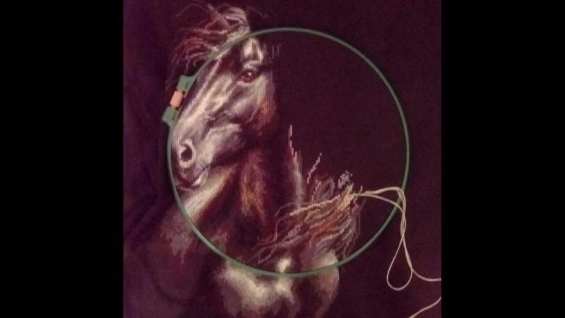 Лошадь .mp4