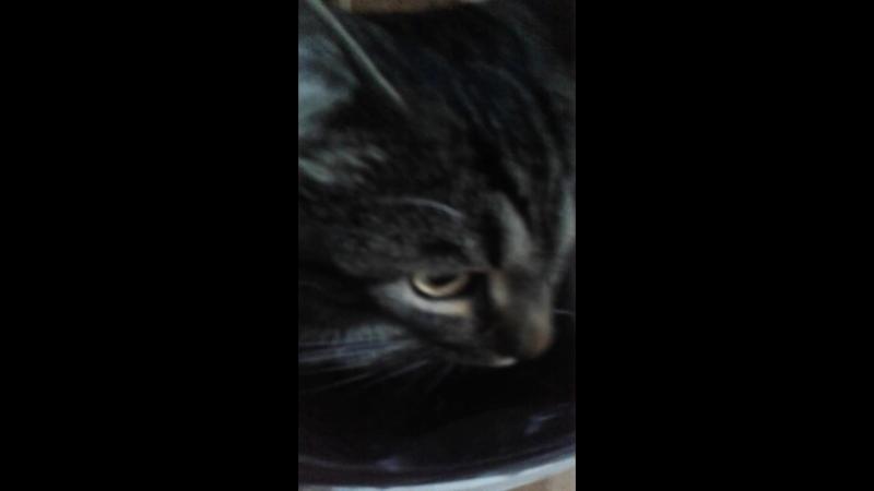 Олькин кот