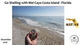 Go Shelling with Me!! Collecting Seashells from Cayo Costa Island off Florida's West Coast