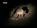 Необычные животные Ника Бейкера Сумчатый крот