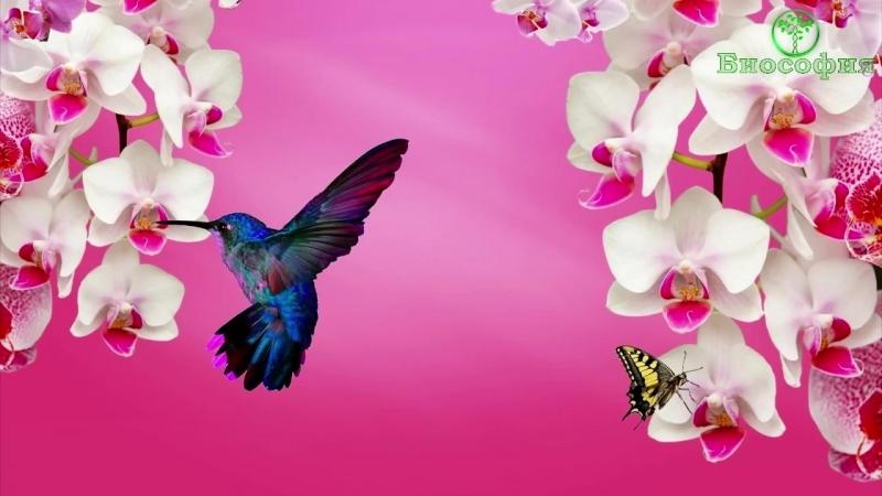 Колибри, Удивительная Птичка