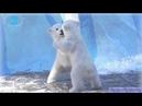 Кто кого Маленькие да удаленькие медвежата получили предупреждение от мамы