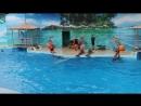 Чудеса в дельфинарии