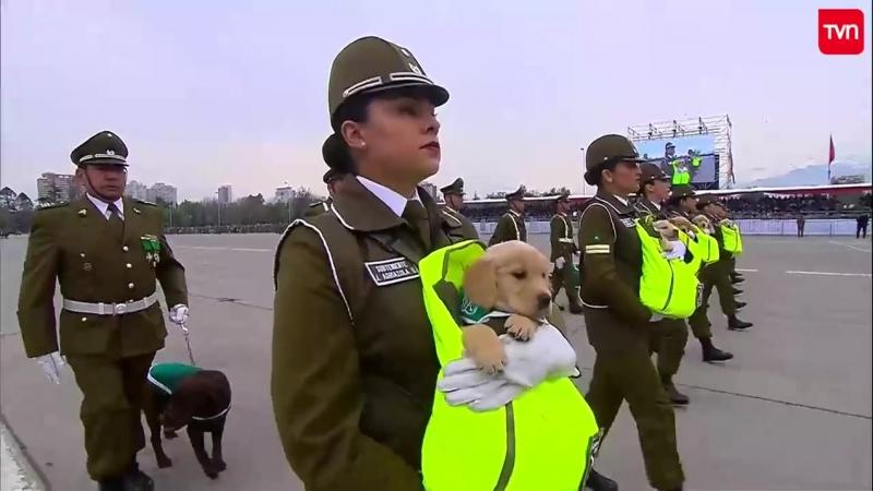 Чилийский парад военных кинологов