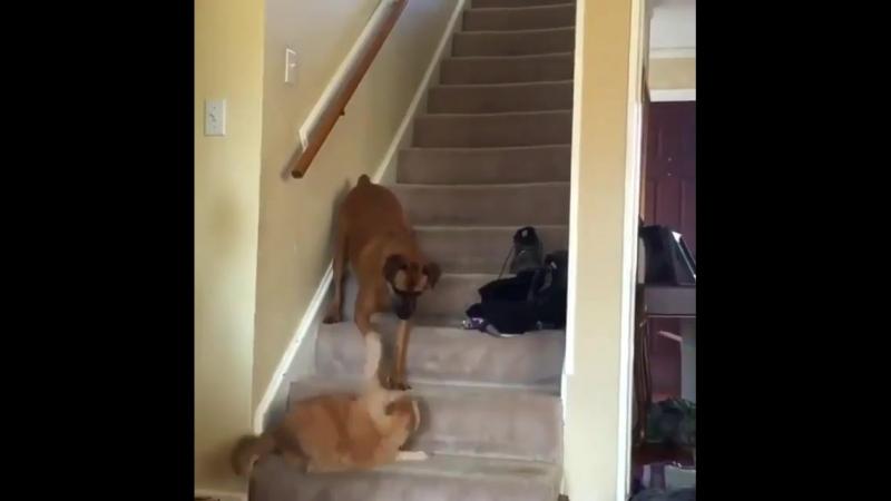 _cat_ _ _dogjoy1_ _question_У кого дома и котик и собачка__house_with_garden__feet_ _dog2_ _film_projector_@smeh_zverey))