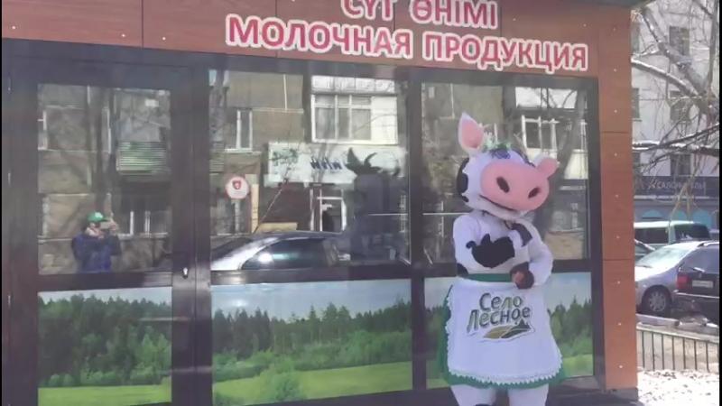 Село Лесное коровка