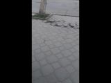 Максим Ромадов Live