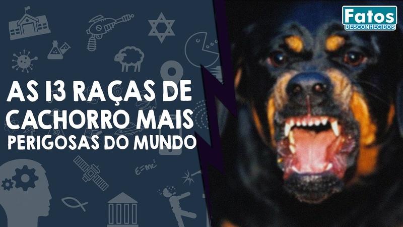 As 13 raças de cachorro mais perigosas do mundo