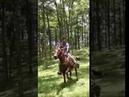 Caballo galopando en la montaña Лошадь скачет на горе 疾馳在山的馬。