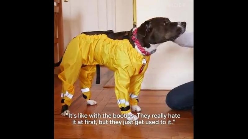 Штаны дождевик для собак