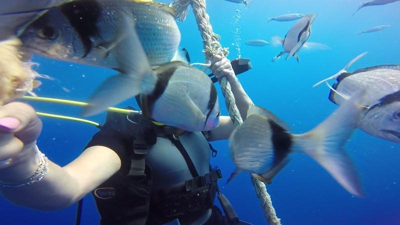 Подводные приключения