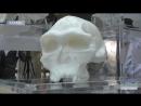 У ХНУ ім Каразіна відкрилася незвичайна виставка 3D черепів
