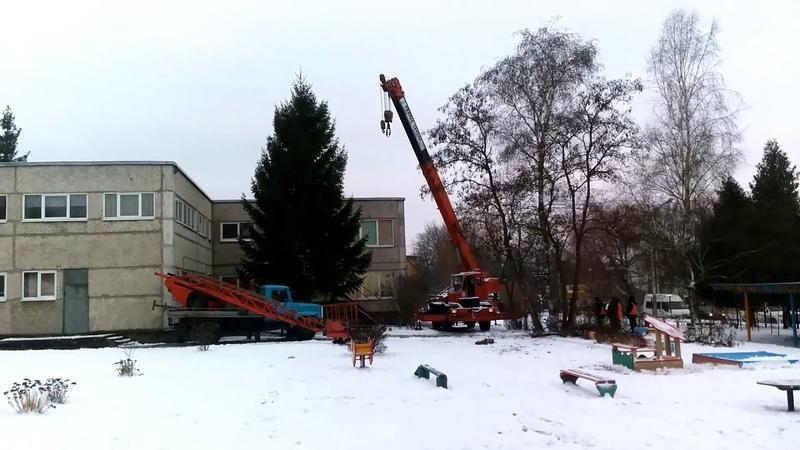В Советске второй год подряд рубят елку в детском саду.