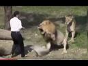 Пьяные люди в зоопарке чувствуют себя героями!