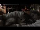 мытищинские коти 1
