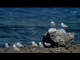 Demis Roussos - I Miss You