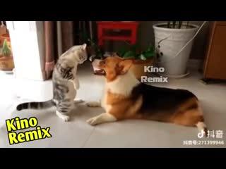 озвучка кота мазохиста kino remix ржач до слез издевайся смешные приколы с животными 2019