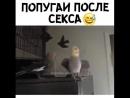M.facebook - 758480915.mp4