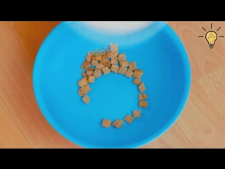 Кормить собаку теперь можно без последствий уборки - #ЛАЙФХАК