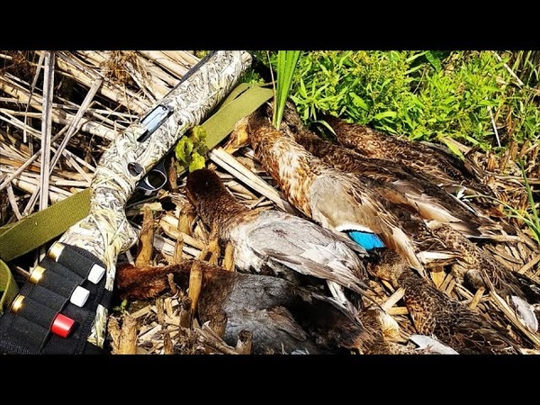 Первая удачная охота после открытия 2018 МЦ-21-12.Охота на утку с манками и чучелами.Duckhunting.