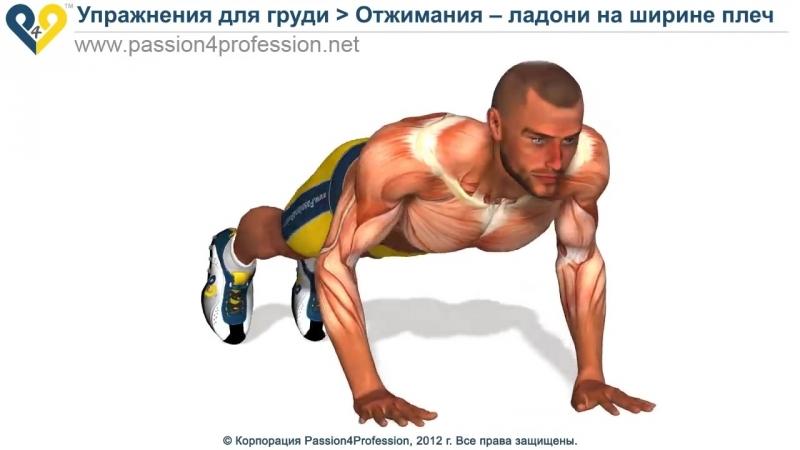 Упражнение на грудь: Отжимания от пола средним хватом.